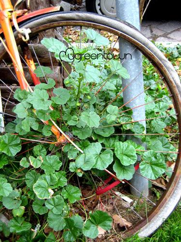 Stadtpflanzen Berlin