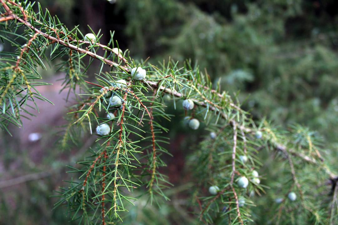 Botanischer Garten Christmas Garden
